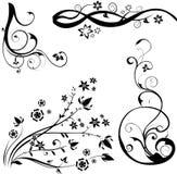 Elementos de um projeto floral Fotos de Stock Royalty Free