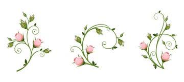 Elementos decorativos do vetor com rosebuds cor-de-rosa ilustração royalty free