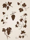 Elementos del diseño de la vid de uva Imagen de archivo