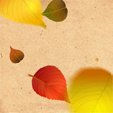 Elementos del diseño de las hojas de otoño Imagen de archivo libre de regalías