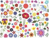 Elementos del diseño floral Foto de archivo libre de regalías