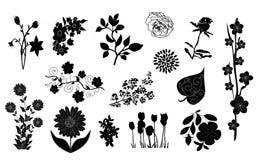 Elementos del diseño floral Fotografía de archivo libre de regalías