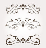 Elementos del diseño floral Imagen de archivo libre de regalías