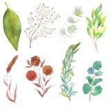 Elementos del diseño floral de la primavera Sistema de las hojas, ramas Fotografía de archivo