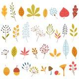 Elementos del diseño floral del otoño Fotos de archivo libres de regalías