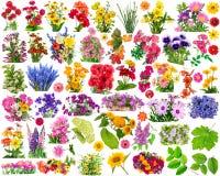 Elementos del diseño gráfico Foto de archivo libre de regalías