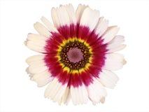 Elementos del diseño: Pista de flor colorida Fotografía de archivo libre de regalías