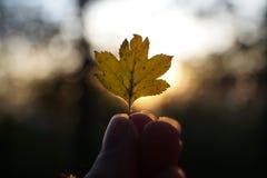 Elementos del otoño Imágenes de archivo libres de regalías