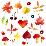 Elementos del otoño de la acuarela Imagen de archivo libre de regalías