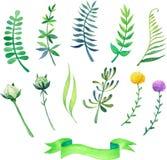 Elementos del verde de la primavera de la acuarela Foto de archivo libre de regalías