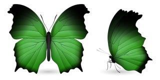 Elementos detalhados da borboleta Vista dianteira e lateral Fotografia de Stock