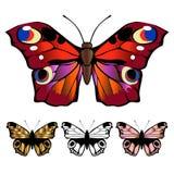 Elementos detallados de la mariposa Imagen de archivo libre de regalías
