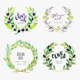 Elementos dibujados mano de la acuarela del aceite de oliva ilustración del vector