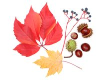 Elementos do outono fotografia de stock royalty free