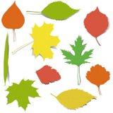 Elementos do outono para o projeto Fotografia de Stock