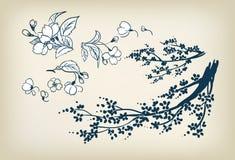 Elementos do projeto da ilustração do esboço do vetor de sakura da flor de cerejeira ilustração do vetor