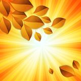 Elementos do projeto das folhas de outono Fotografia de Stock