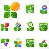 Elementos do projeto do vetor. Folhas ajustadas. Fotos de Stock