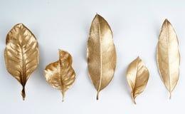Elementos dourados do projeto da folha Elementos para o convite, cartões da decoração de casamento, dia de Valentim, cartões Isol Foto de Stock Royalty Free