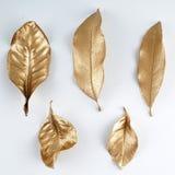 Elementos dourados do projeto da folha Elementos para o convite, cartões da decoração de casamento, dia de Valentim, cartões Isol Fotografia de Stock