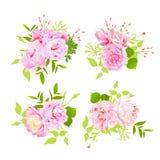 Elementos dulces del diseño del vector de los ramos de las peonías en estilo elegante lamentable Imagen de archivo libre de regalías