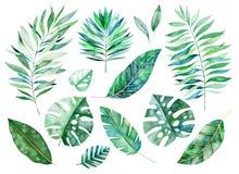 Elementos florais da aquarela Handpainted Folhas da aquarela, ramos ilustração royalty free