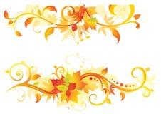 Elementos florais do outono Imagem de Stock