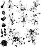 Elementos florais do projeto Fotografia de Stock
