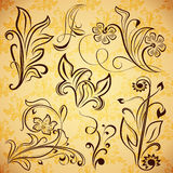Elementos florais do vintage. Imagem de Stock