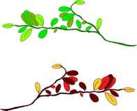 Elementos florais, ilustração do vetor Fotos de Stock