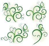 Elementos florais verdes Foto de Stock