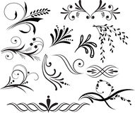 Elementos florales Imagen de archivo libre de regalías
