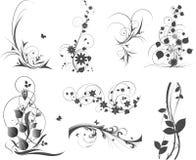 Elementos florales Foto de archivo