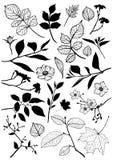 Elementos florales del vector ilustración del vector