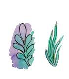Elementos herbarios dibujados mano Foto de archivo
