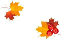 Elementos hermosos del diseño del otoño Imagen de archivo