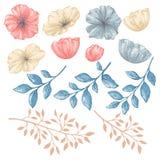 Elementos isolados florais Imagens de Stock