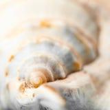 Elementos naturales del balneario - concha marina con el starshell Foto de archivo libre de regalías