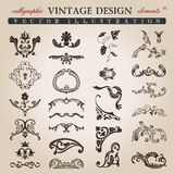 Elementos reais do projeto do vintage caligráfico da flor Fotos de Stock