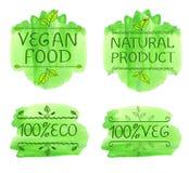 Elementos tipográficos desenhados à mão para o projeto Produtos de Eco e alimento do vegetariano Respingo do verde de Watecolor,  ilustração stock