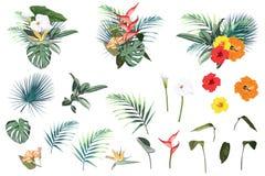 Elementos tropicales de las vacaciones de verano: flores y hojas Sistema del vector ilustración del vector