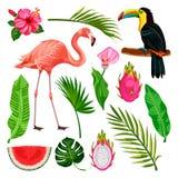 Elementos tropicales del diseño del verano en el fondo blanco Ejemplo del vector del tucán, flamenco, hojas de palma, fruta del d ilustración del vector