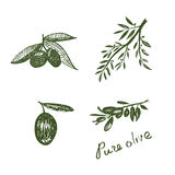 Elementos verde-oliva Handdrawn Fotos de Stock