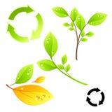 Elementos vivos verdes Foto de archivo libre de regalías