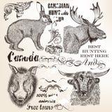 Elementos y animales decorativos del vector en estilo del vintage Imagenes de archivo