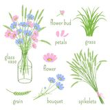 Elements of botany. Set of wildflowers, spikelets, the glass vases and elements of botany stock illustration