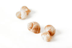 Elements of empty snail shells stock photo