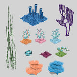 Elements of reef, algae, corals and sea flowers. Big vector set Royalty Free Stock Images
