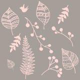 Elements set. Set drawn of plant elements Royalty Free Stock Image