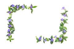 Elementy dla dekoracji kwiaty i li?cie barwinek Bia?y odosobniony t?o miejsce dla tw?j inskrypci fotografia royalty free